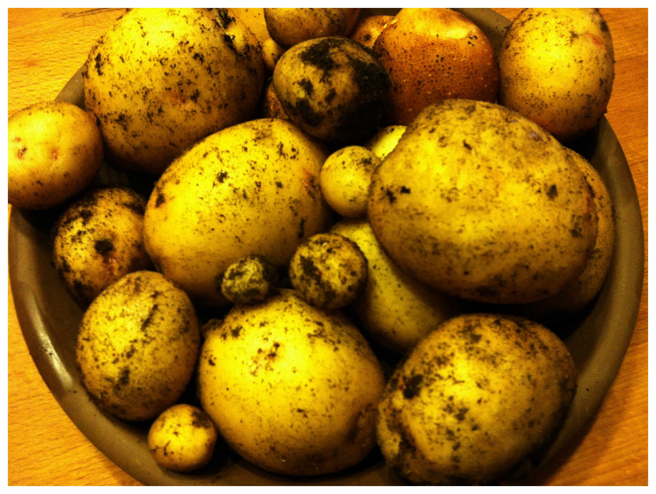Garden Fresh Potatoes – chefkurtvonkahle
